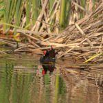 Turismo Ornitológico Badajoz