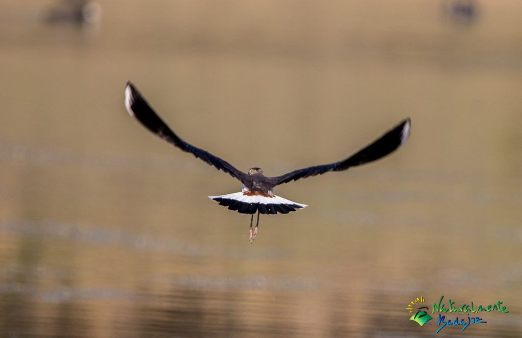 Birding Badajoz