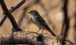 Aves Extremadura
