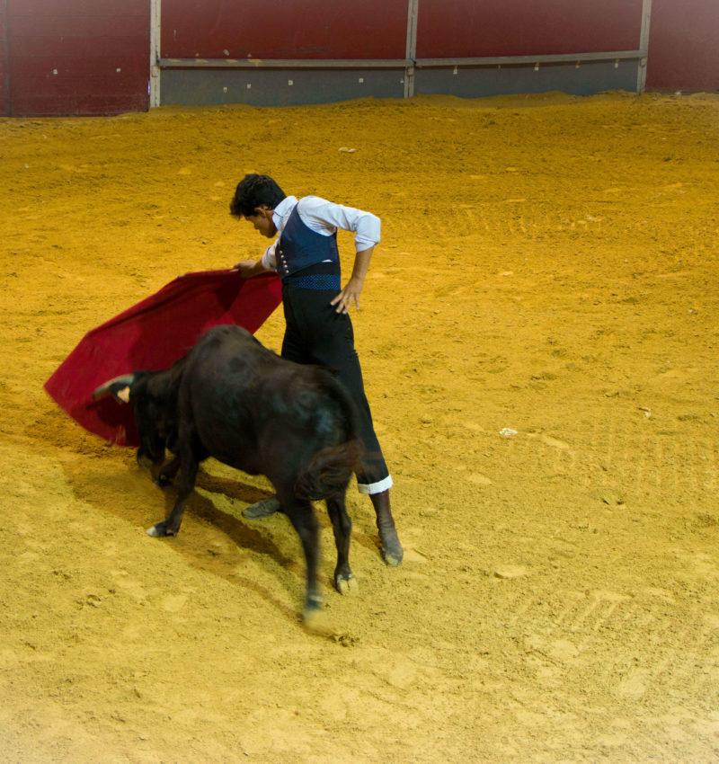 Toros y Caballos en Badajoz