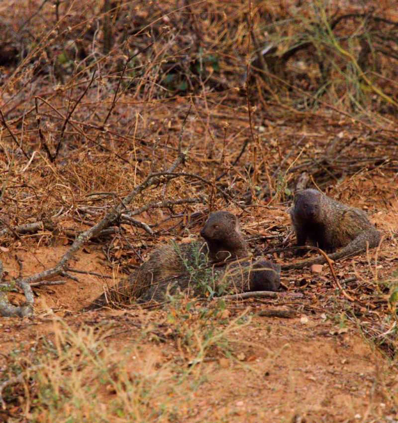 De caza en Extremadura