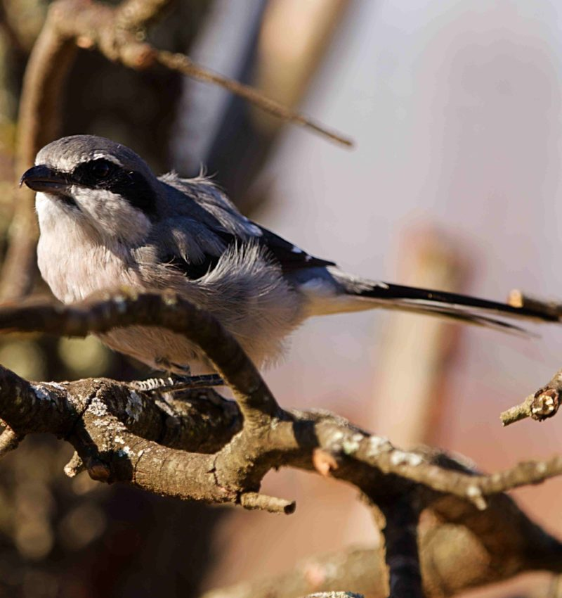 Pájaros en Badajoz